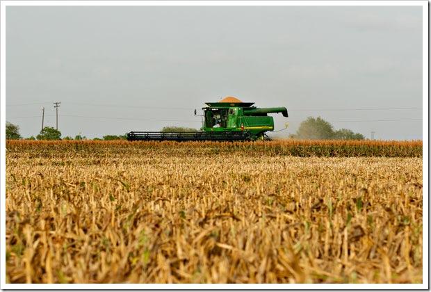 Combine cutting grain