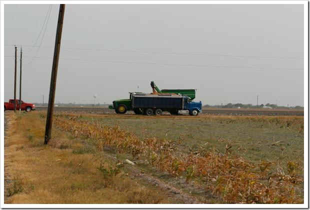 Emptying into grain truck