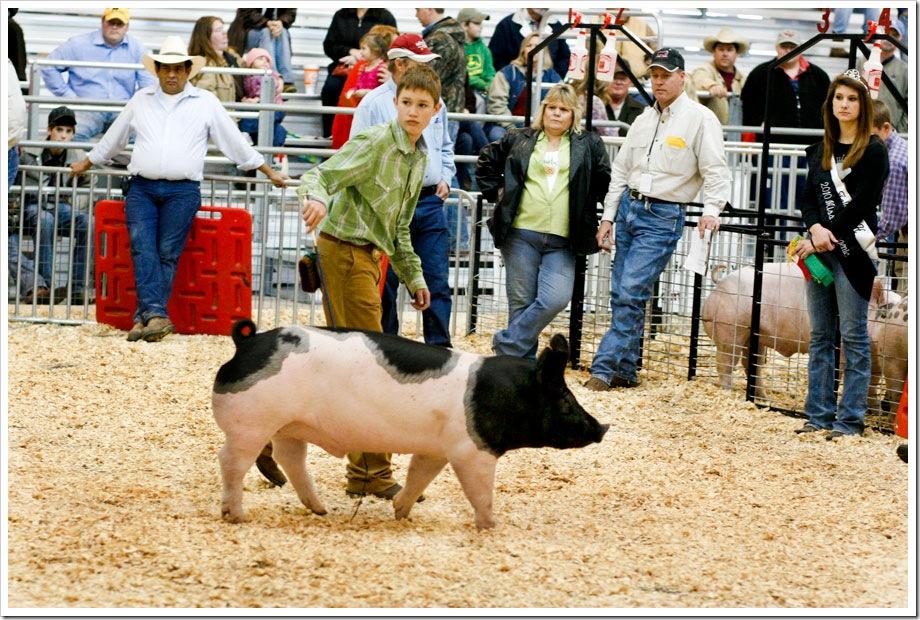 2010 Grand Champion Pig