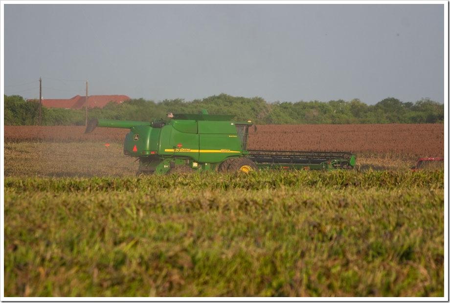 grain sorghum harvest, John Deere combine