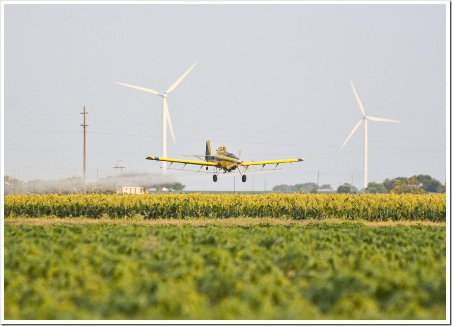 grain sorghum cropduster in South Texas