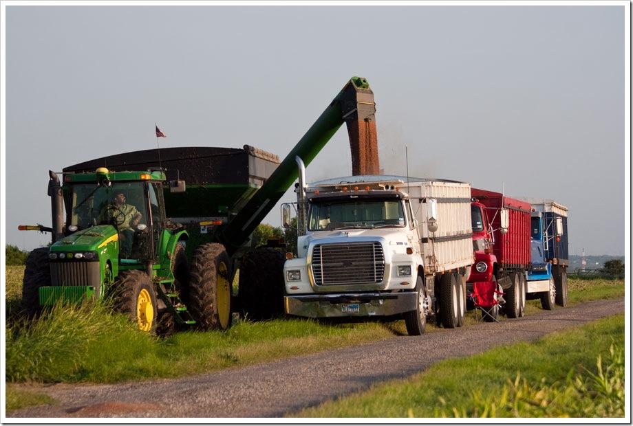 South Texas grain sorghum harvest