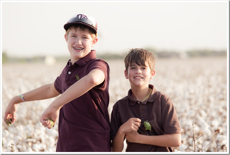 cotton in south texas