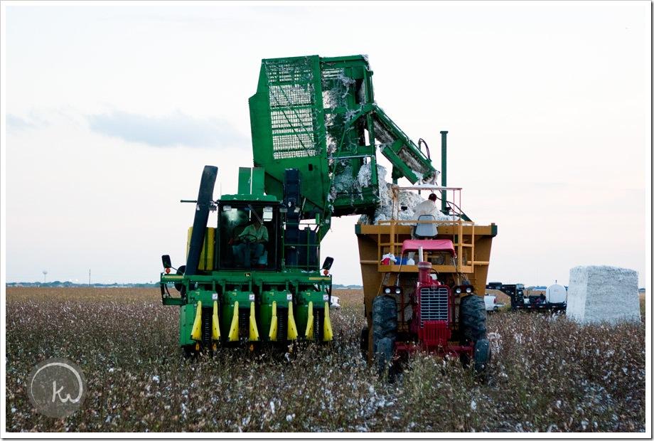 South-Texas-Cotton