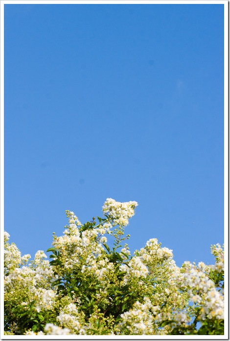 Coastal-Bend-Photographer-Kelly-Whatley-flowers2