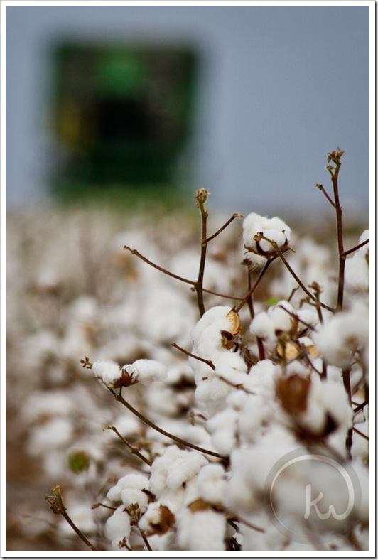 south-texas-cotton-picker