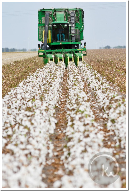 John-Deere-Cotton-Picker-Texas