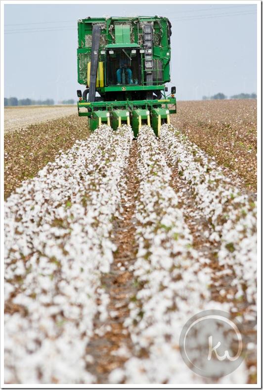 John-Deere-Cotton-Picker-Texas