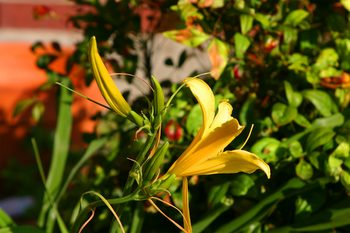 Img_0686firstdaylilly2005_1